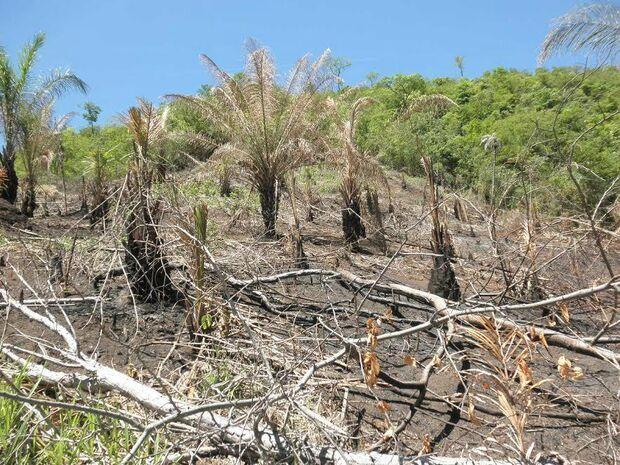 Fazendeiro é autuado em R$ 8 mil por desmatamento e incêndio ilegal