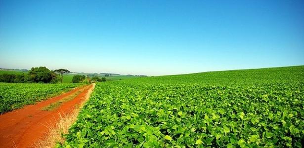 Produtores fogem da seca na 'nova fronteira' agrícola brasileira