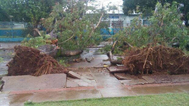 Chuva acompanhada de vento destelha casas e derruba árvores em cidade de MS
