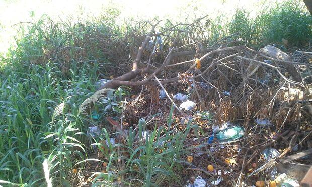 Inconformados com lixo e mato alto, vizinhos procuram por dono de terreno no Aero Rancho
