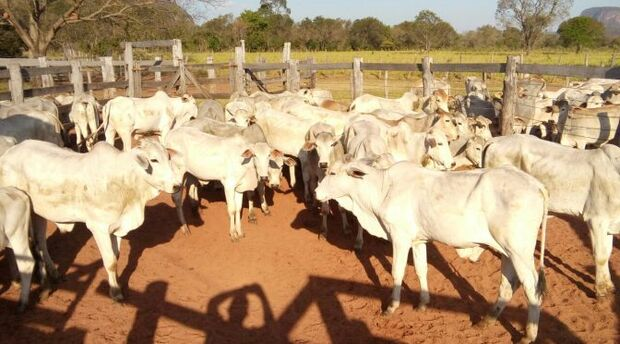Plano de controle biológico para Mato Grosso do Sul é finalizado