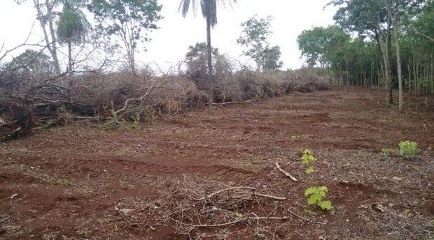 Fazendeira é multada em R$ 240 mil por derrubada de centenas de árvores protegidas por lei