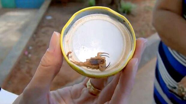 Quatro dias após morte na região, criança é picada por escorpião
