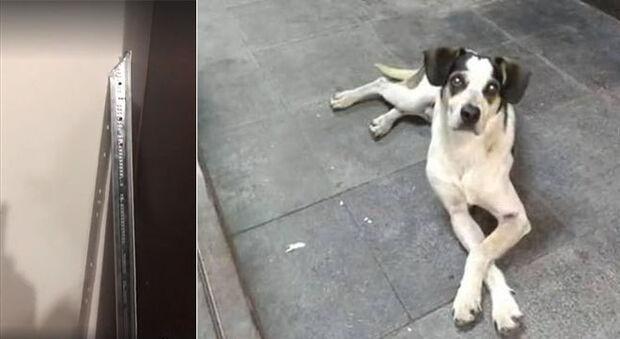 Cachorra morta foi agredida com barra de alumínio pontiaguda