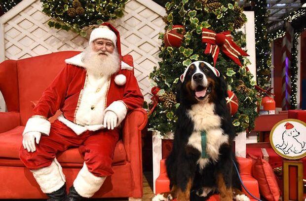 Shoppings inovam e oferecem 'trono pet' em decoração de Natal para animais de estimação