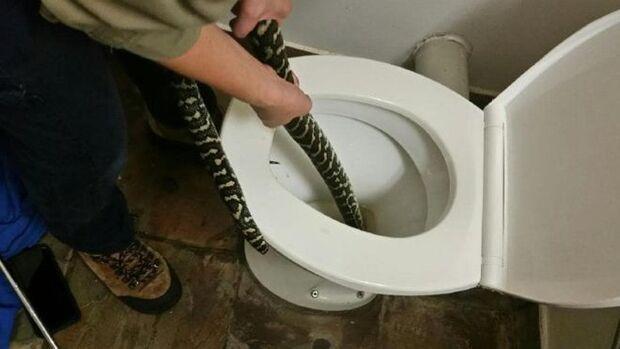'Olha a cobra': mulher é picada por serpente ao usar vaso sanitário