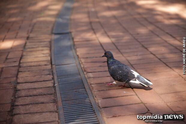 Com 'histórias de horror' na bagagem, campo-grandenses aprovam lei que proíbe alimentar pombos