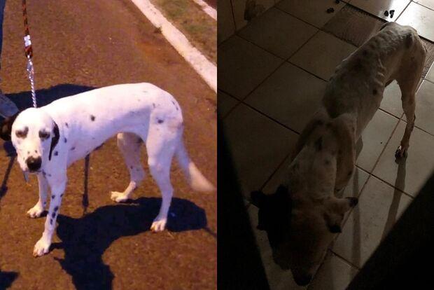 Protetora que salvou cachorros abandonados diz que portão já estava estragado
