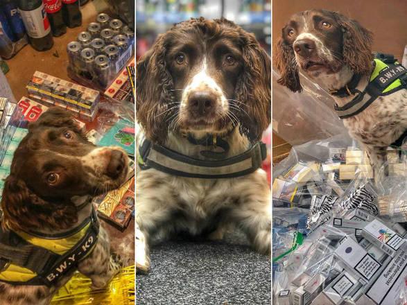 Contrabandistas oferecem R$ 125 mil por cabeça de cão farejador