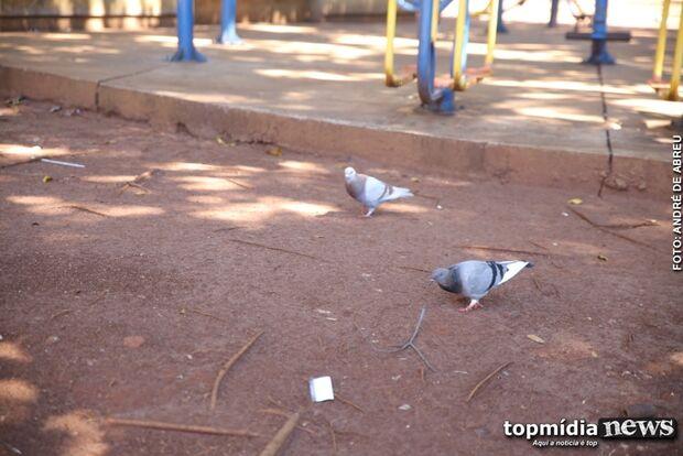 Com nova lei, dar comida para pombo em Campo Grande pode custar até R$ 15 mil
