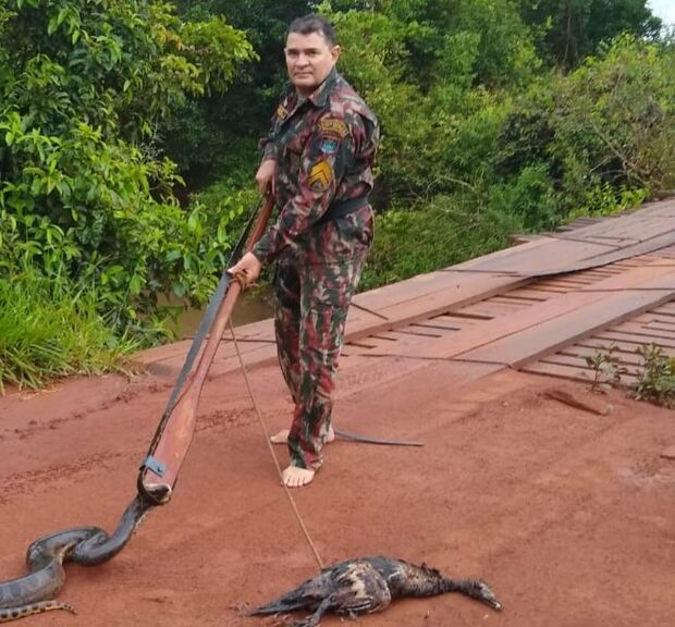 Sucuri aparece em parque urbano, mas ao ser capturada pela PMA vomita pato