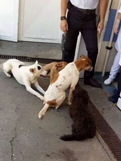 'Melhores amigos': cachorrinhos esperam morador de rua enquanto dono é tratado em hospital