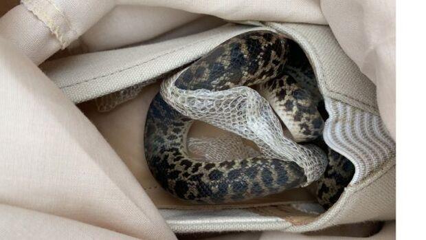 'Excesso de bagagem': mulher descobre cobra píton na mala após voltar de viagem
