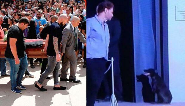 Cadela de Emiliano Sala vai ao velório do dono e emociona as redes sociais