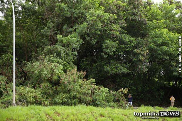 Árvore cai, trânsito 'trava' e condutores trafegam na contramão em avenida da Capital