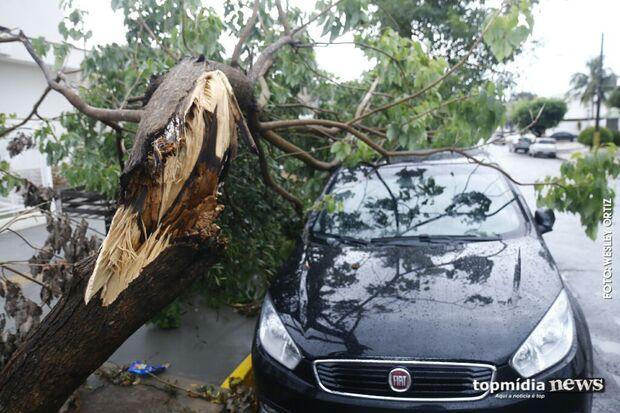 Árvore condenada por podridão não resiste ao vento e cai em carro no Jardim dos Estados