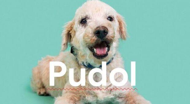 Ação oferece vira-latas a quem buscar cachorro de raça no Google