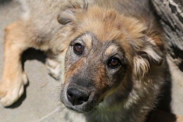 PRF flagra homem agredindo cachorro nas margens de rodovia