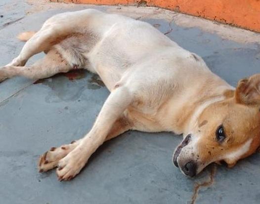 Cão morre em frente a clínica veterinária e local é acusado de negar socorro por ser animal de rua