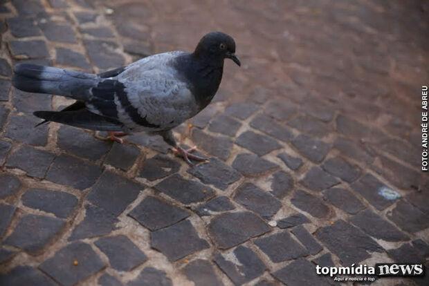 Enquete: maioria dos leitores já enfrentou problemas com pombos