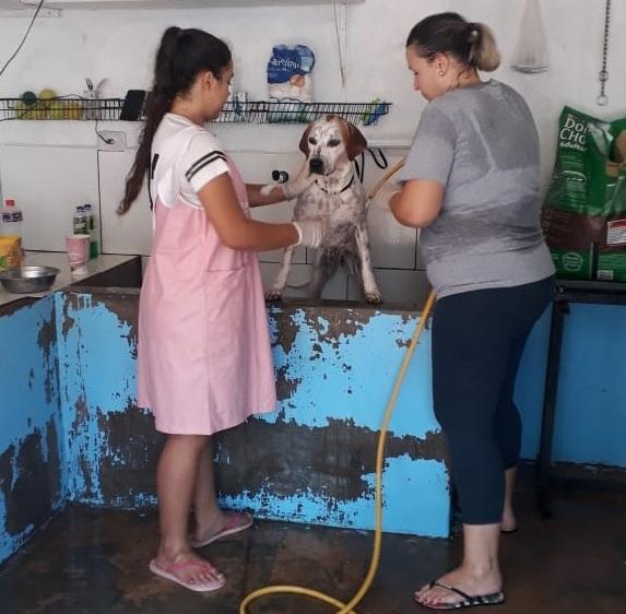 Ação de amigas leva vacina, banho e até faxina a ONG que cuida de vira-latas em Campo Grande