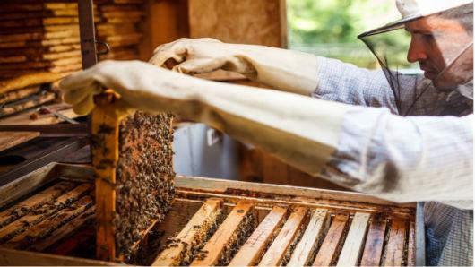 Prefeitura capacitará agricultores familiares da apicultura