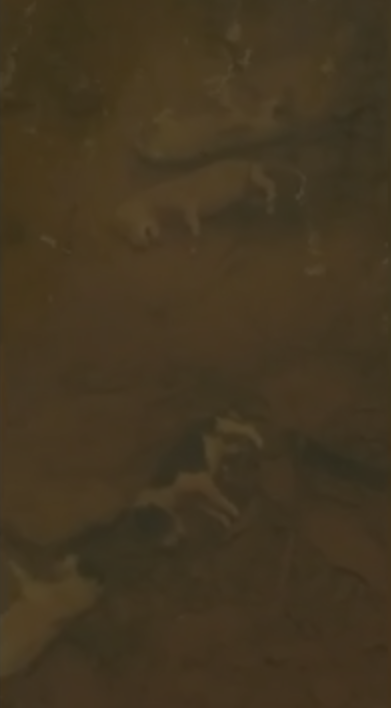 Mulher encontra oito filhotes de cachorro mortos em córrego