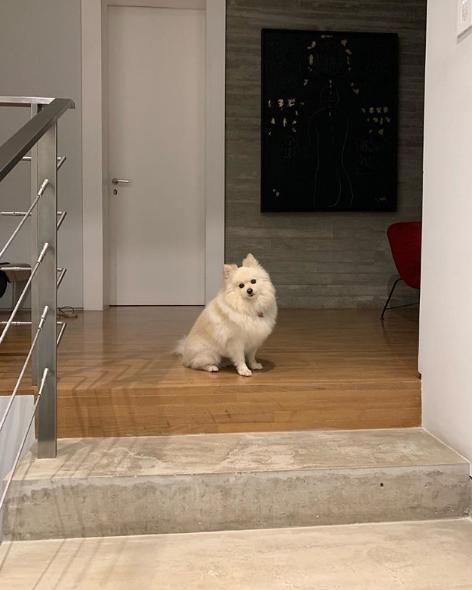 Viúva de Ricardo Boechat mostra cadela à espera do retorno de jornalista