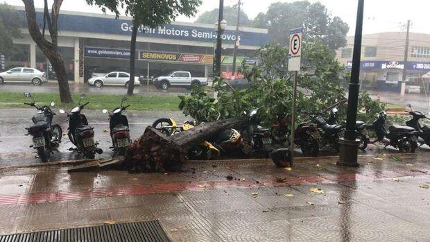 Chuva forte derruba árvores e deixa ruas alagadas em Dourados