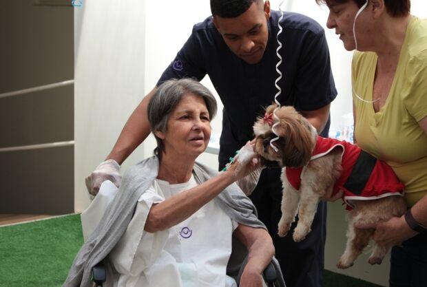 Lei libera entrada de animais de estimação em hospitais