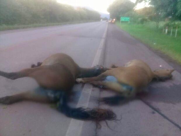 Acidente na BR-262 acaba com dois cavalos mortos e minerador ferido
