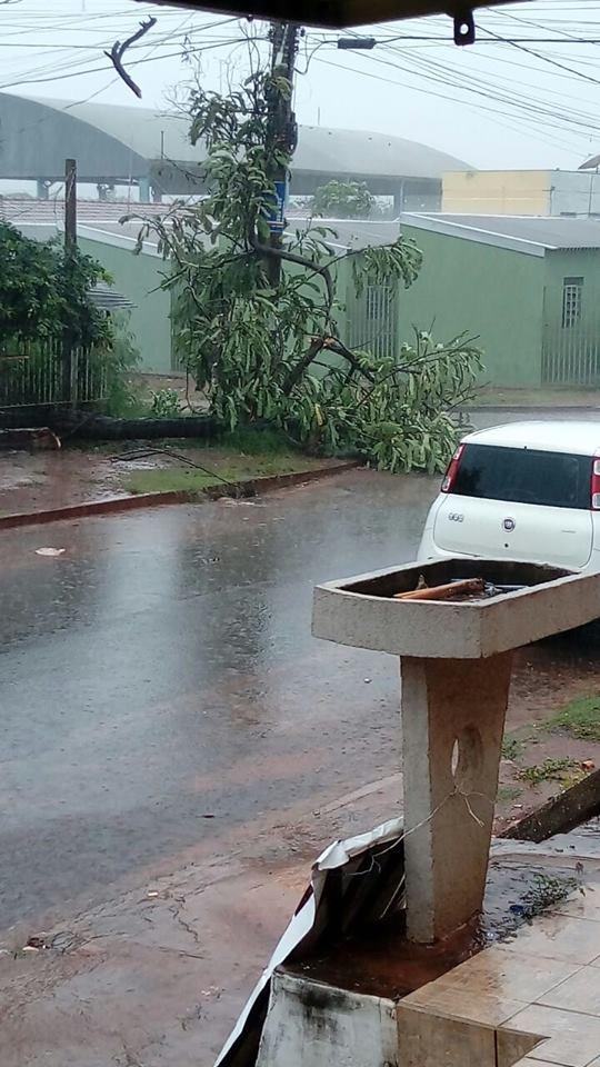 Chuva derruba árvore em cima de poste de energia e morador destaca risco de choque elétrico
