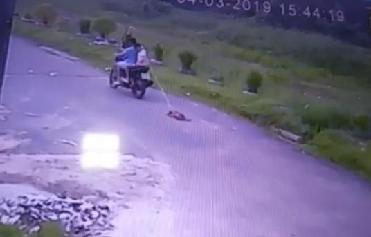 Vídeo de cachorro sendo arrastado no asfalto por moto gera revolta nas redes sociais