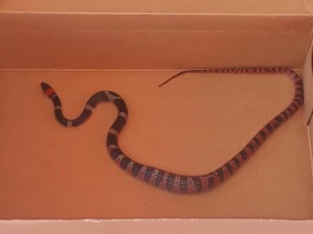 Olha a cobra: mulher encontra animal enrolado em varal de sua residência