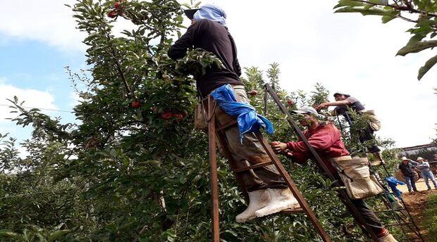 Após colheita da maçã no Sul, índios retornam a MS movimentando a economia dos municípios