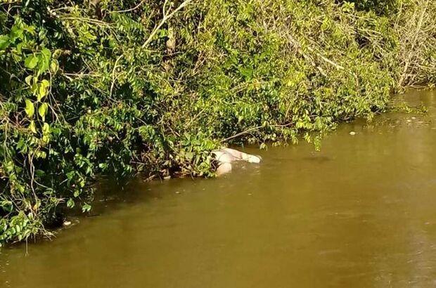 Corpo sem identificação é encontrado boiando em rio de MS