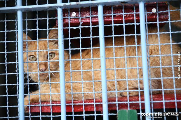 Tutores com senha para castração de gatos devem procurar CCZ para agendamento
