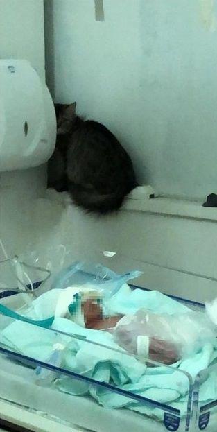 Maternidade abre investigação após gato ser flagrado ao lado de prematuro