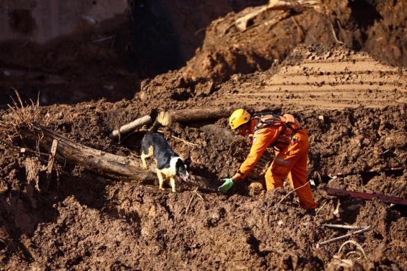 Cães são responsáveis por 80% dos corpos achados em Brumadinho
