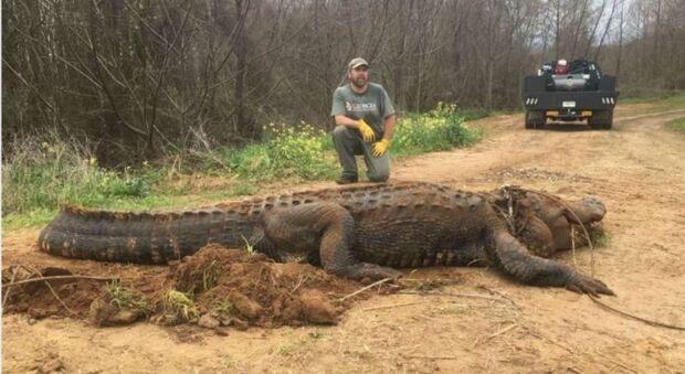 Jacaré de 4 metros e 320 kg é capturado em propriedade rural