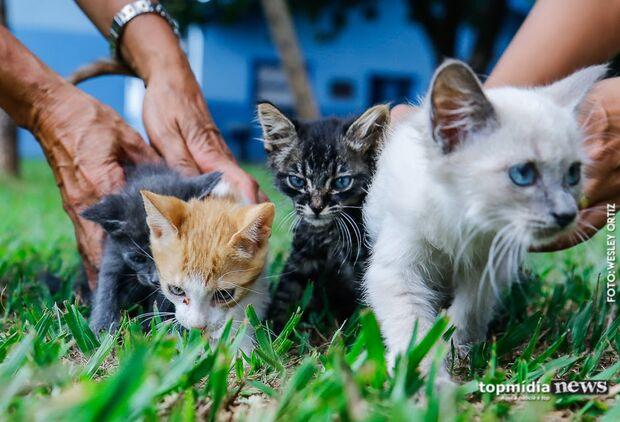 Jovem é espancado por vizinho ao soltar rojão para espantar gatos em MS