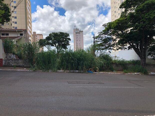 Perigo anunciado: árvore corre risco de cair e terreno é terror de moradores no centro
