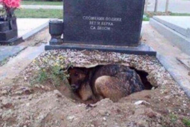 Cachorro cava buraco no túmulo do dono para ficar mais perto dele