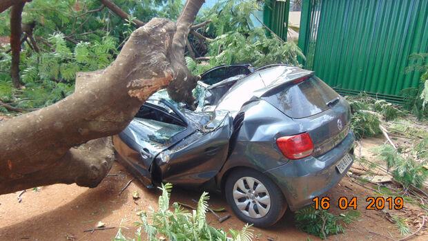 Árvore cai, destrói veículo e seis ruas ficam sem energia em Campo Grande