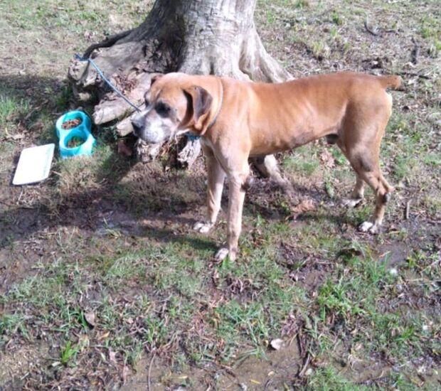 Cachorro é encontrado amarrado e abandonado às margens de rio