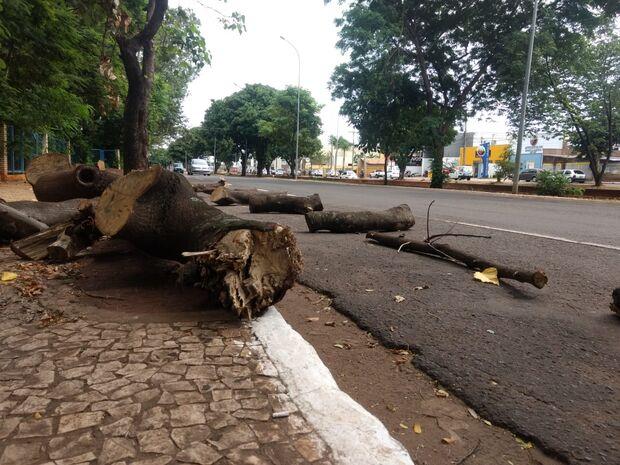 Repórter Top: moradora denuncia 'massacre de árvores' na Ernesto Geisel
