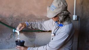 """Campo Grande inicia fase de coleta de ovos que serão utilizados na criação de """"mosquitos do bem"""""""