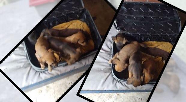 Homem encontra mala fechada com quatro filhotes de cachorro