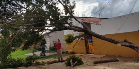 Queda de árvore interrompe tráfego e causa transtornos em cidade do MS