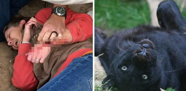 Jaguar que atacou mulher que tentava tirar selfie não será sacrificado, garante zoológico